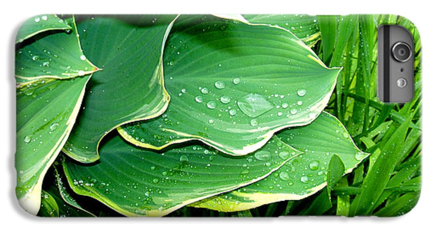 Hostas IPhone 6 Plus Case featuring the photograph Hosta Leaves And Waterdrops by Nancy Mueller