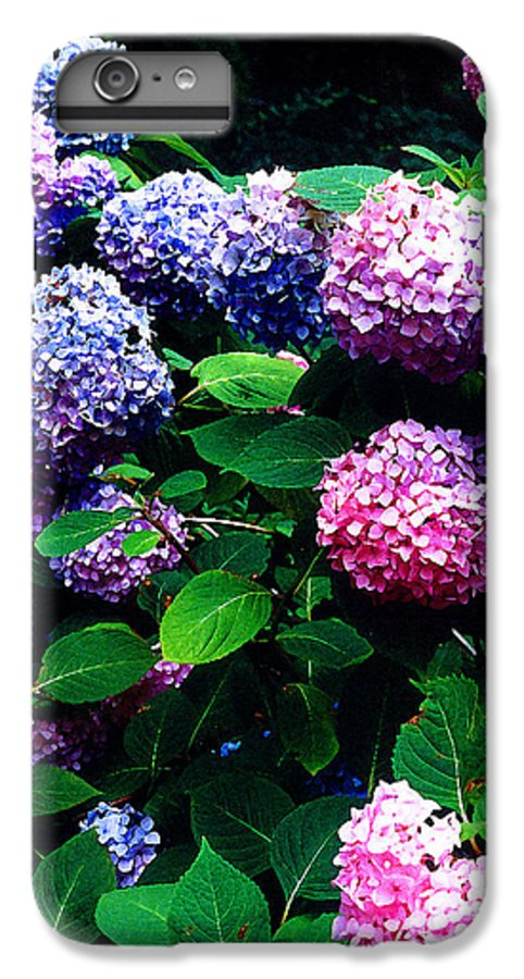 Flowers IPhone 6 Plus Case featuring the photograph Hydrangeas by Nancy Mueller