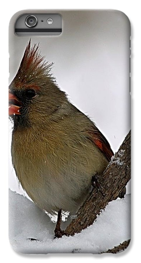 Bird IPhone 6 Plus Case featuring the photograph I Love Seeds by Gaby Swanson