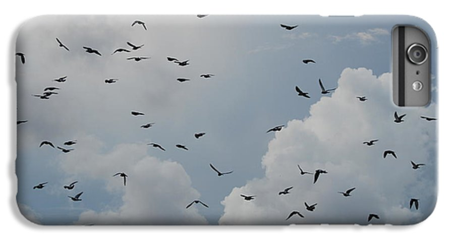 Birds IPhone 6 Plus Case featuring the photograph In Flight by Rob Hans