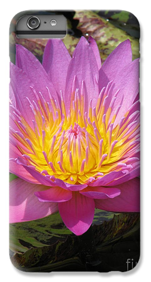 Lotus IPhone 6 Plus Case featuring the photograph In Position by Amanda Barcon
