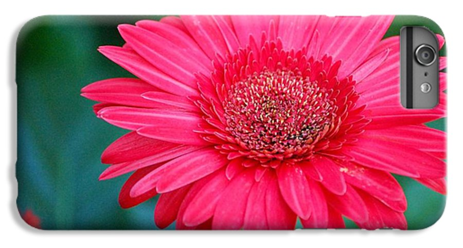 Gerber Daisy IPhone 6 Plus Case featuring the photograph In The Pink by Debbi Granruth