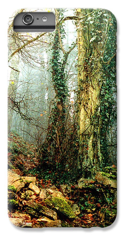 Ivy IPhone 6 Plus Case featuring the photograph Ivy In The Woods by Nancy Mueller