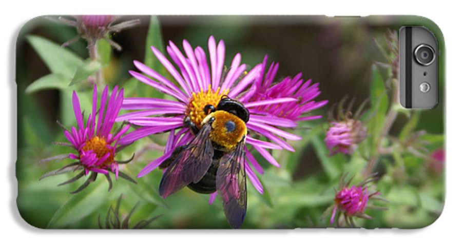 Bumble Bee IPhone 6 Plus Case featuring the photograph Just Beeing Debbie-may by Debbie May