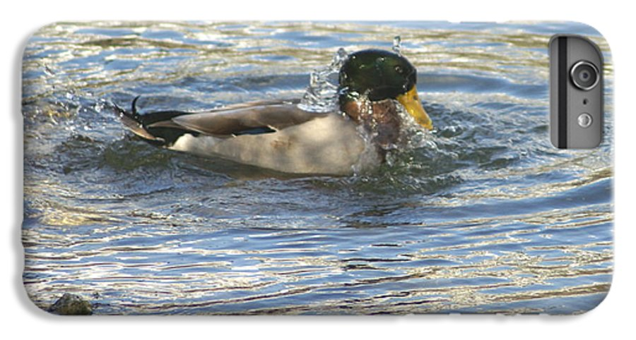 Ducks IPhone 6 Plus Case featuring the photograph Just Ducking Around by Debbie May
