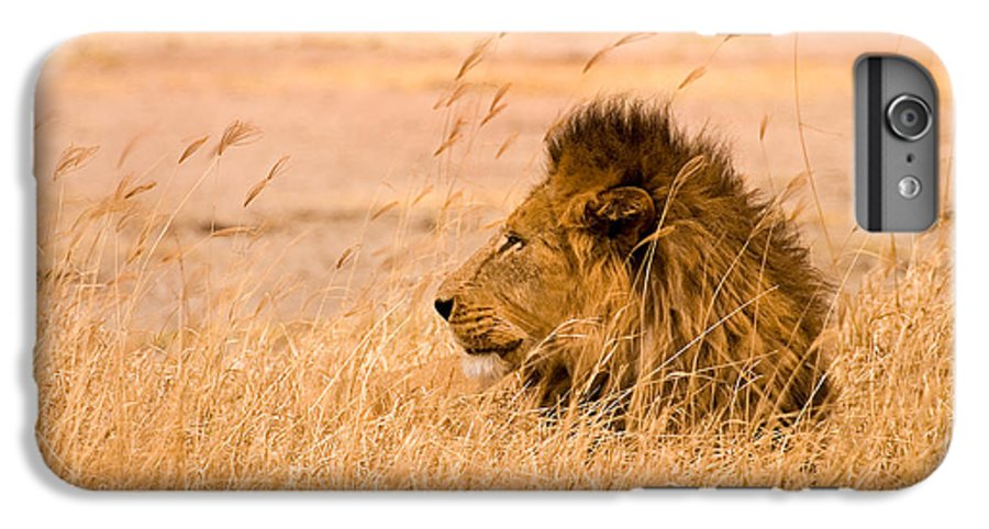 3scape IPhone 6 Plus Case featuring the photograph King Of The Pride by Adam Romanowicz