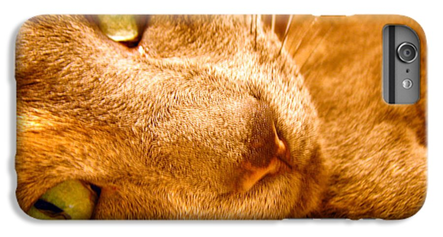 Cats IPhone 6 Plus Case featuring the photograph Kitty by Amanda Barcon