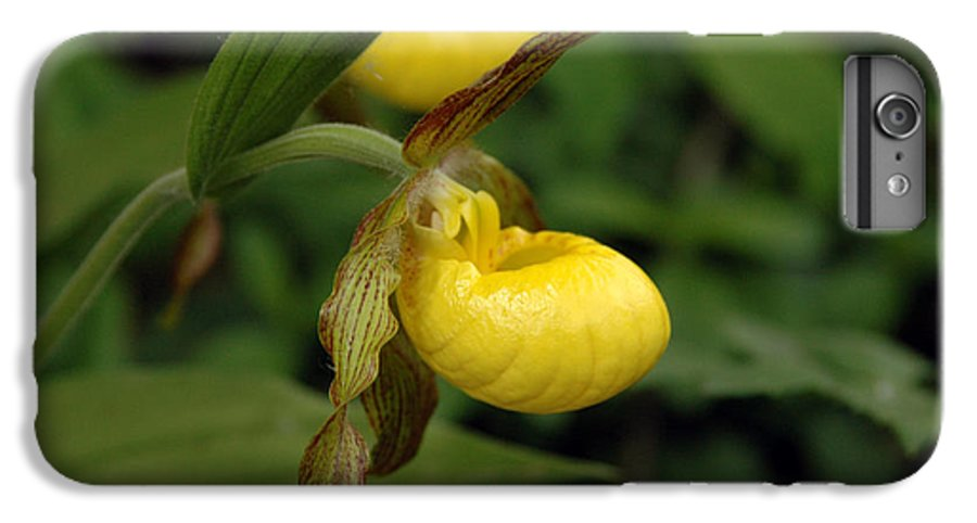 Ladyslipper IPhone 6 Plus Case featuring the photograph Lady Slipper by Kathy Schumann