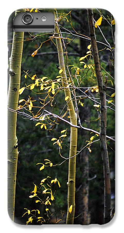 Aspen IPhone 6 Plus Case featuring the photograph Late Aspen by Jerry McElroy