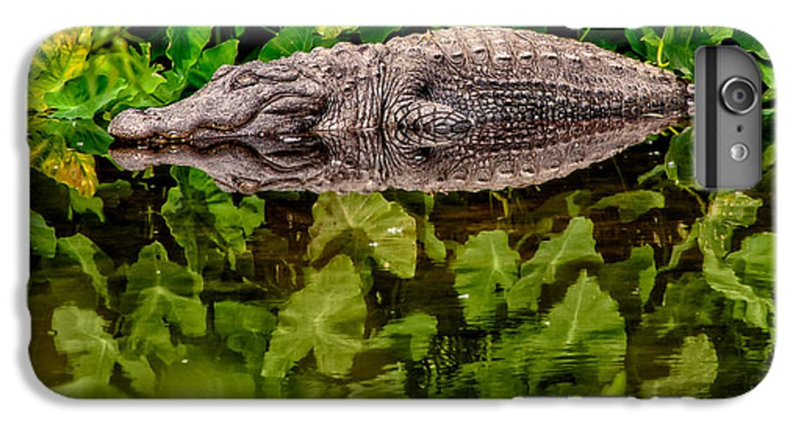 Alligator IPhone 6 Plus Case featuring the photograph Let Sleeping Gators Lie by Christopher Holmes
