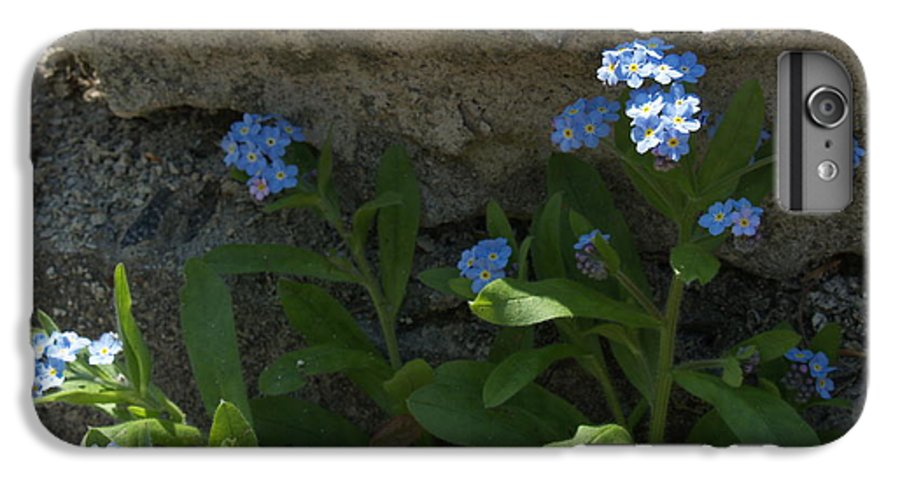 Forget-me-nots IPhone 6 Plus Case featuring the photograph Life Will Prevail by Anna Lisa Yoder