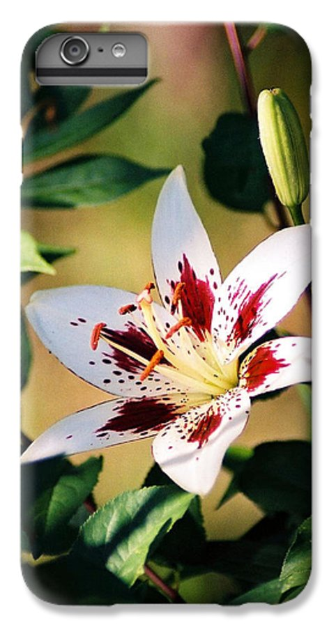 Flower IPhone 6 Plus Case featuring the photograph Lily by Steve Karol