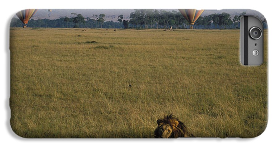 Lion IPhone 6 Plus Case featuring the photograph Lion Ignores Balloons by Carl Purcell