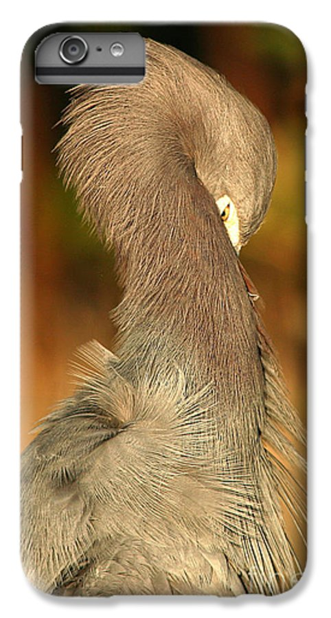 Heron IPhone 6 Plus Case featuring the photograph Little Blue Heron Feeling Bashful by Max Allen