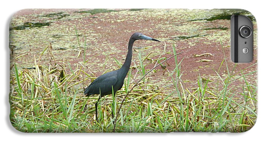 Nature IPhone 6 Plus Case featuring the photograph Little Blue Heron by Kathy Schumann