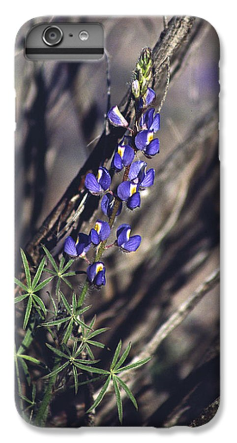 Flower IPhone 6 Plus Case featuring the photograph Lonely Lupine by Randy Oberg