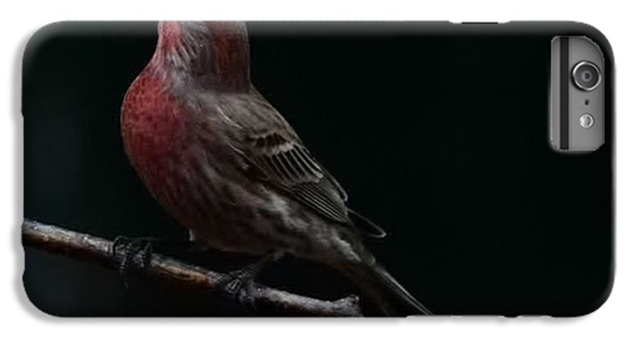 Finch IPhone 6 Plus Case featuring the photograph Looking Towards Heaven by Gaby Swanson
