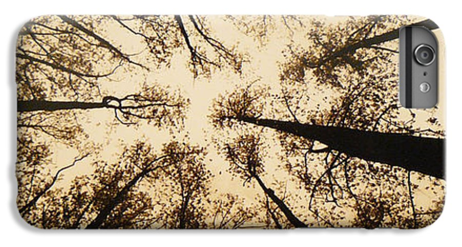 Trees IPhone 6 Plus Case featuring the photograph Looking Up by Jack Paolini