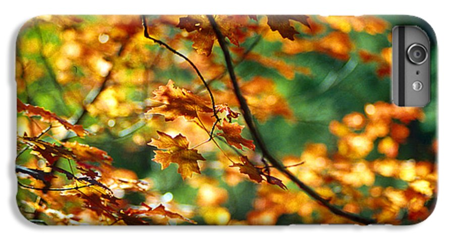 Fall Color IPhone 6 Plus Case featuring the photograph Lost In Leaves by Kathy McClure