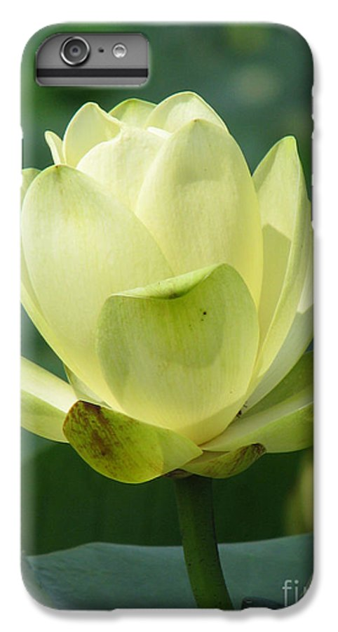 Lotus IPhone 6 Plus Case featuring the photograph Lotus by Amanda Barcon