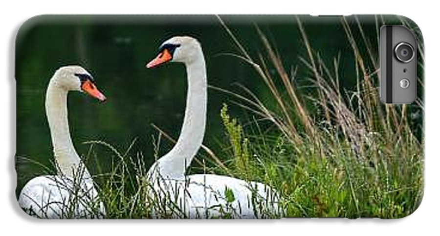 Clay IPhone 6 Plus Case featuring the photograph Loving Swans by Clayton Bruster