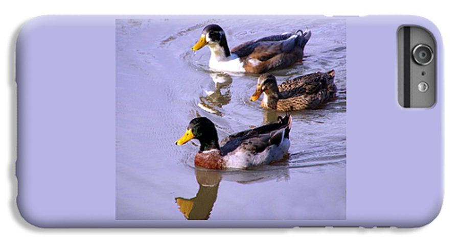 Duck IPhone 6 Plus Case featuring the photograph Mallards by Kenna Westerman