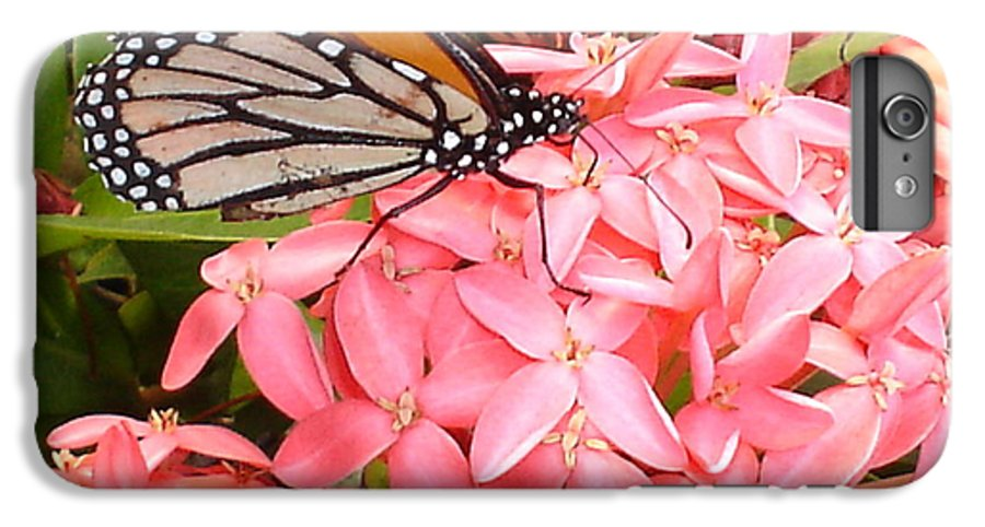 Butterfly IPhone 6 Plus Case featuring the photograph Monarch On Huneysuckle by Chandelle Hazen