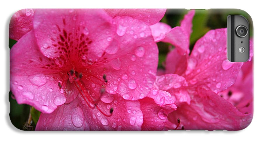 Azaleas IPhone 6 Plus Case featuring the photograph Morning Dew by Mary Gaines
