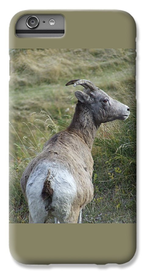 Bighorn Sheep IPhone 6 Plus Case featuring the photograph Mother Bighorn by Tiffany Vest