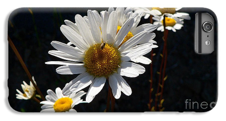 Flowers IPhone 6 Plus Case featuring the photograph Mountain Daisy by Larry Keahey