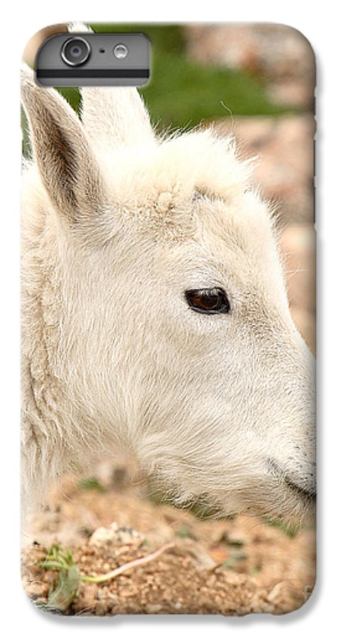 Mountain Goat IPhone 6 Plus Case featuring the photograph Mountain Goat Kid With Peaceful Gaze by Max Allen