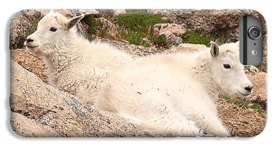 Mountain Goat IPhone 6 Plus Case featuring the photograph Mountain Goat Twins by Max Allen