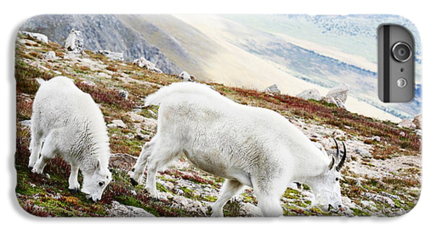 Mountain IPhone 6 Plus Case featuring the photograph Mountain Goats 1 by Marilyn Hunt