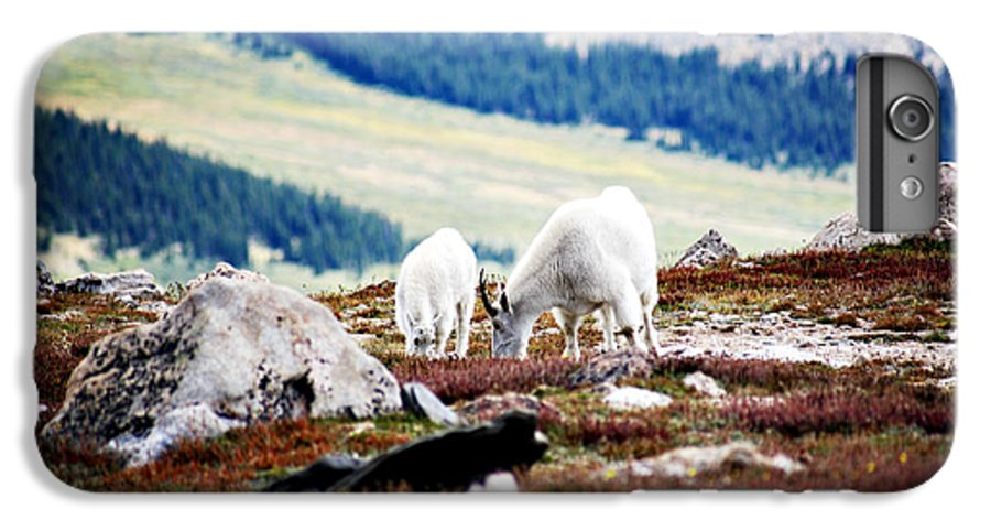 Animal IPhone 6 Plus Case featuring the photograph Mountain Goats 2 by Marilyn Hunt