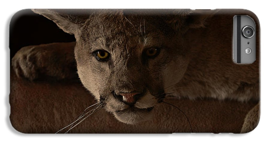 Cougar IPhone 6 Plus Case featuring the photograph Mountain Lion A Large Graceful Cat by Christine Till