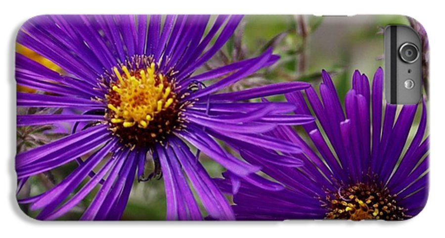 Plant IPhone 6 Plus Case featuring the painting My Purple Ways by Debbie May