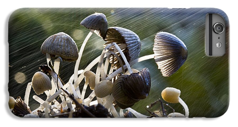 Mushrooms Rain Showers Umbrellas Nature Fungi IPhone 6 Plus Case featuring the photograph Nature by Avalon Fine Art Photography