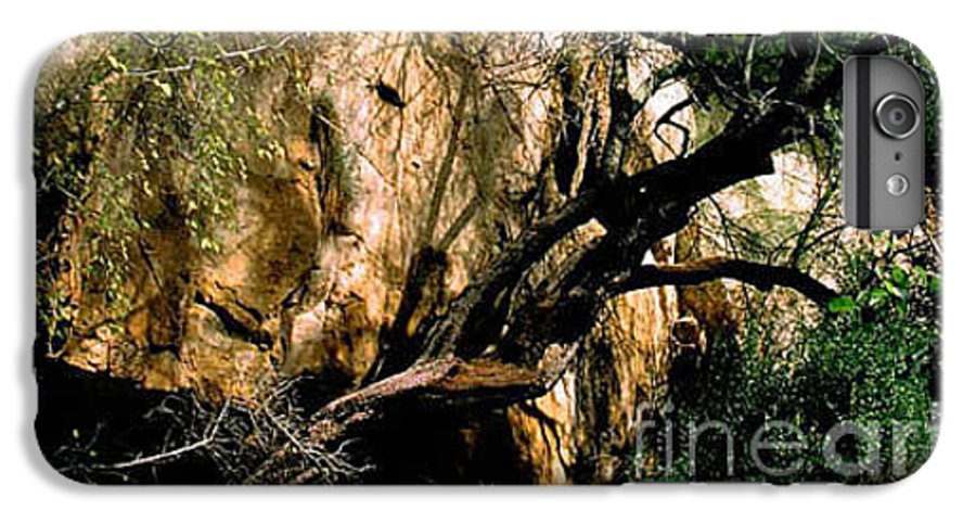 Trees IPhone 6 Plus Case featuring the photograph Old Tree by Kathy McClure