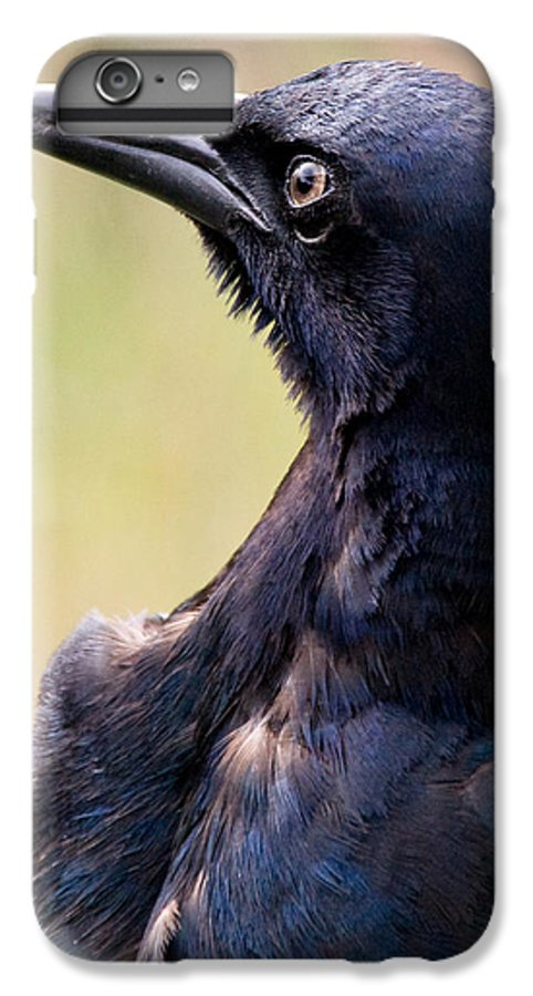 Bird IPhone 6 Plus Case featuring the photograph On Alert by Christopher Holmes