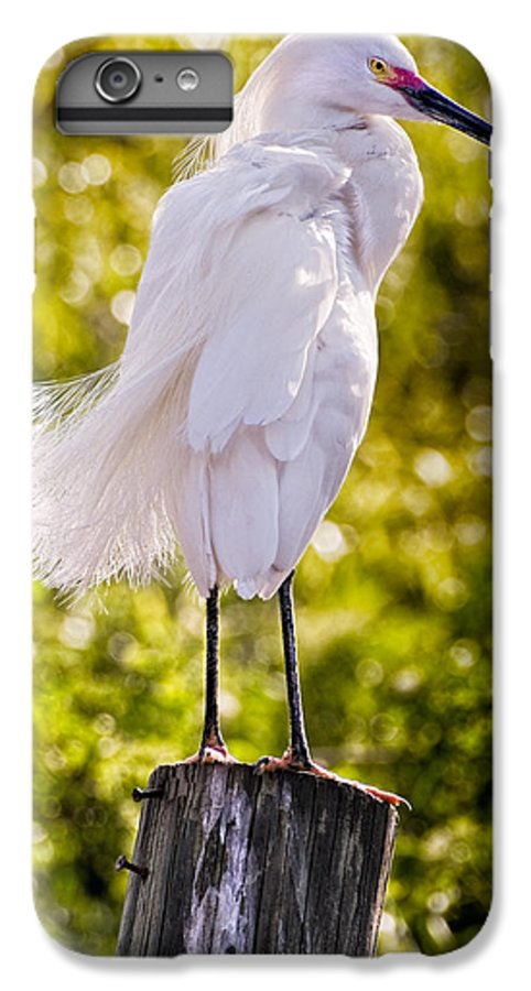 snowy Egret IPhone 6 Plus Case featuring the photograph On Watch by Christopher Holmes