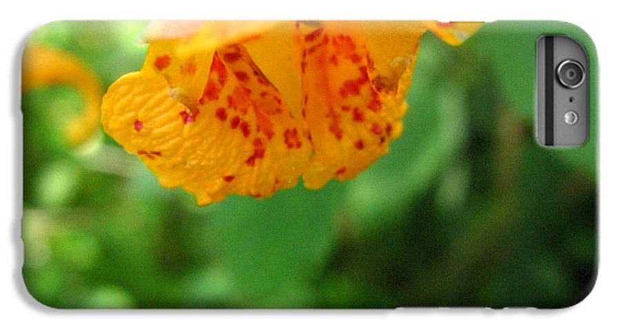 Flower IPhone 6 Plus Case featuring the photograph Orange Flower by Melissa Parks
