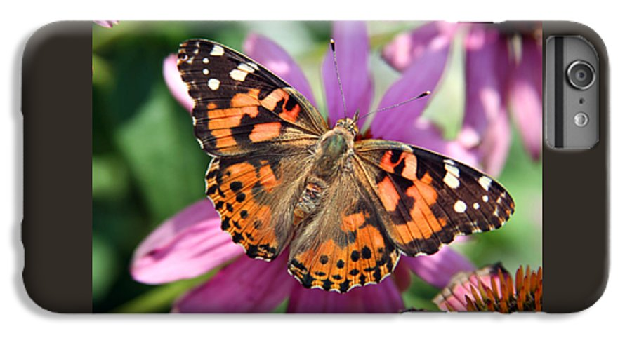 Painted Lady IPhone 6 Plus Case featuring the photograph Painted Lady Butterfly by Margie Wildblood