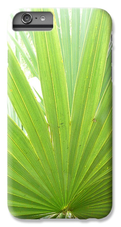 Green IPhone 6 Plus Case featuring the photograph Palmetto by Kathy Schumann