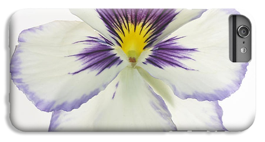Pansy Genus Viola IPhone 6 Plus Case featuring the photograph Pansy 2 by Tony Cordoza