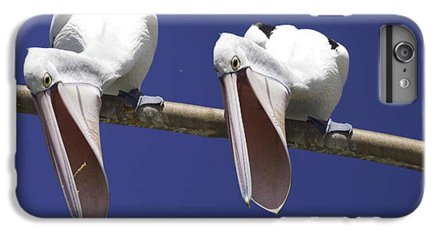 Pelican IPhone 6 Plus Case featuring the photograph Pelican Burp by Sheila Smart Fine Art Photography