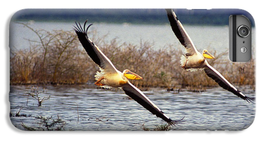 Birds IPhone 6 Plus Case featuring the photograph Pelicans In Flight by Carl Purcell