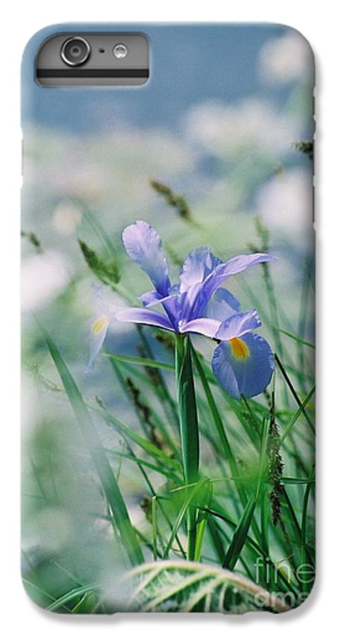 Periwinkle IPhone 6 Plus Case featuring the photograph Periwinkle Iris by Nadine Rippelmeyer