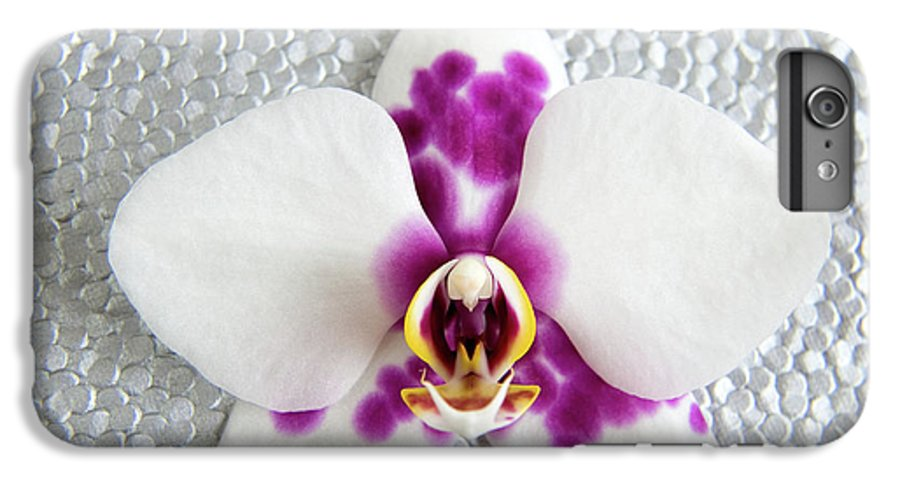Nature IPhone 6 Plus Case featuring the photograph Phalaenopsis Yu Pin Panda by Julia Hiebaum