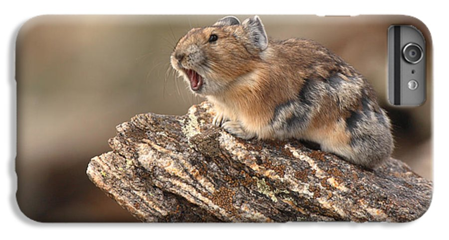 Pika IPhone 6 Plus Case featuring the photograph Pika Barking From Rocktop Perch by Max Allen