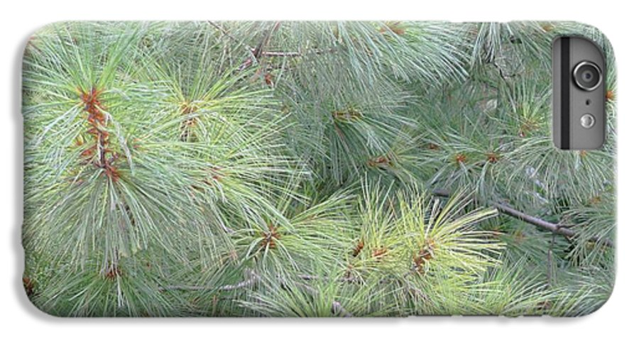 Pines IPhone 6 Plus Case featuring the photograph Pines by Rhonda Barrett